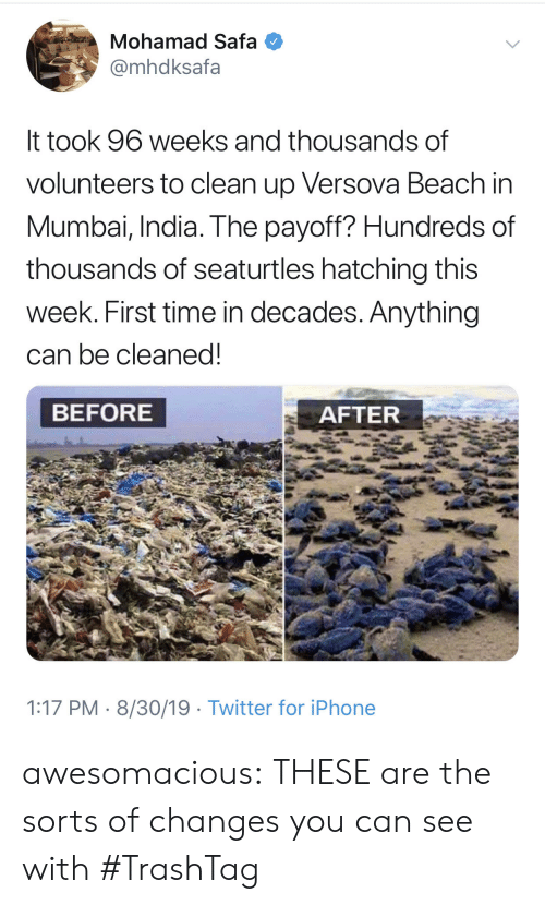decades: Mohamad Safa  @mhdksafa  It took 96 weeks and thousands of  volunteers to clean up Versova Beach in  Mumbai, India. The payoff? Hundreds of  thousands of seaturtles hatching this  week. First time in decades. Anything  can be cleaned!  BEFORE  AFTER  1:17 PM 8/30/19 Twitter for iPhone awesomacious:  THESE are the sorts of changes you can see with #TrashTag