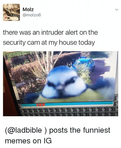 Funny Memes For Ig : Molz there was an intruder alert on the security camat my