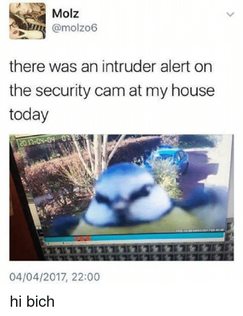 My House, House, and Today: Molz  @molzo6  there was an intruder alert on  the security cam at my house  today  04/04/2017, 22:00 hi bich