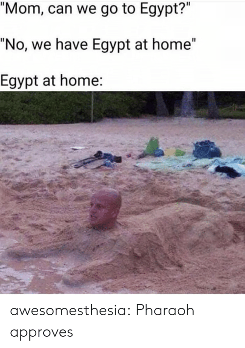 """Egypt: """"Mom, can we go to Egypt?""""  """"No, we have Egypt at home""""  Egypt at home: awesomesthesia:  Pharaoh approves"""