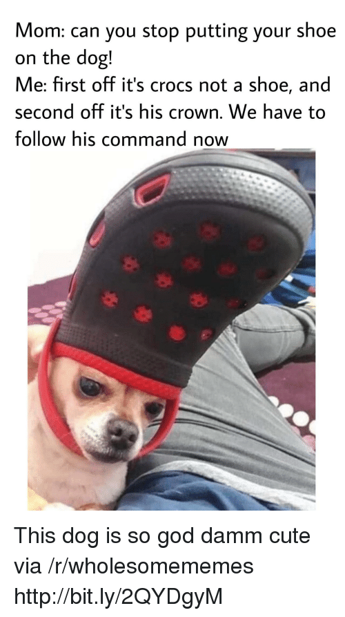 Damm: Mom: can you stop putting your shoe  on the dog!  Me: first off it's crocs not a shoe, and  second off it's his crown. We have to  follow his command now This dog is so god damm cute via /r/wholesomememes http://bit.ly/2QYDgyM