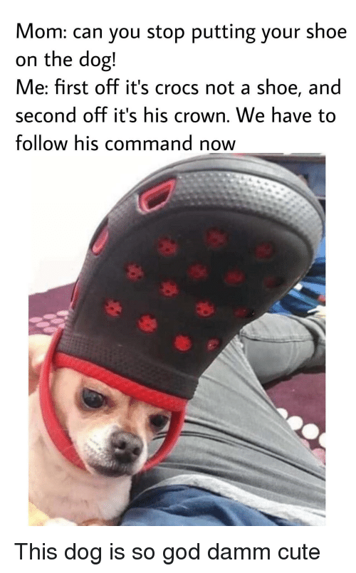 Damm: Mom: can you stop putting your shoe  on the dog!  Me: first off it's crocs not a shoe, and  second off it's his crown. We have to  follow his command now This dog is so god damm cute