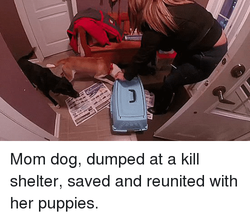 Puppies, Mom, and Her: Mom dog, dumped at a kill shelter, saved and reunited with her puppies.