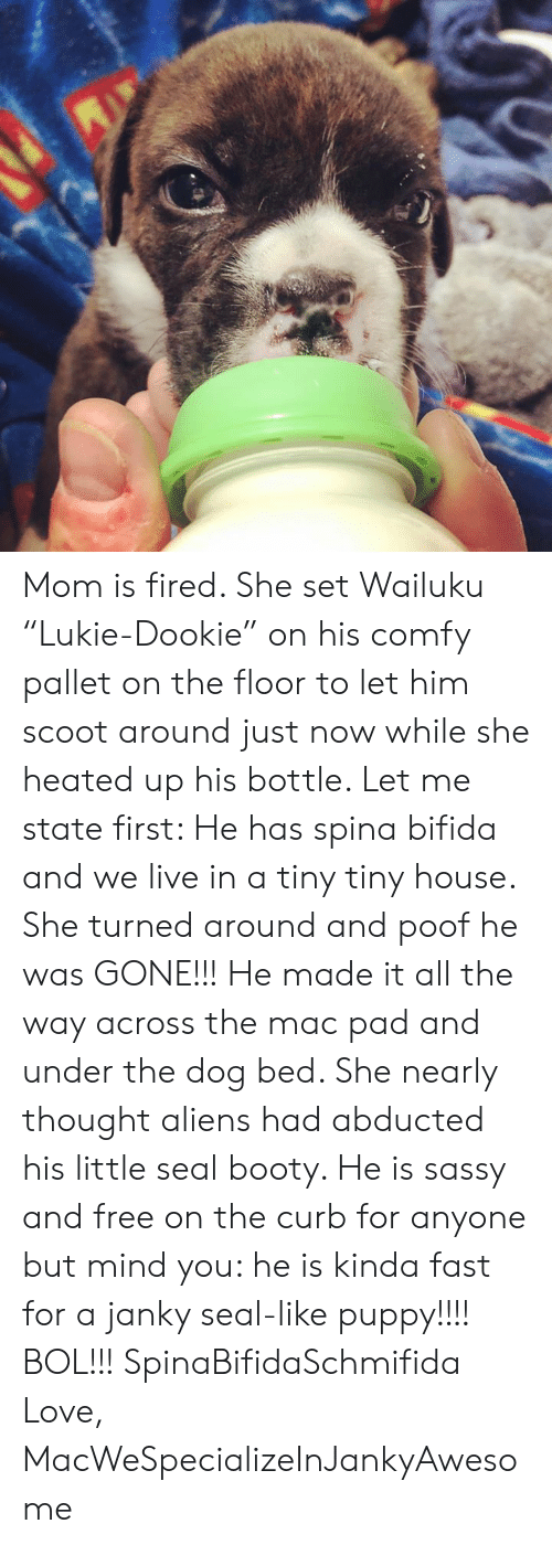 """tiny house: Mom is fired. She set Wailuku """"Lukie-Dookie"""" on his comfy pallet on the floor to let him scoot around just now while she heated up his bottle. Let me state first: He has spina bifida and we live in a tiny tiny house. She turned around and poof he was GONE!!! He made it all the way across the mac pad and under the dog bed. She nearly thought aliens had abducted his little seal booty. He is sassy and free on the curb for anyone but mind you: he is kinda fast for a janky seal-like puppy!!!! BOL!!! SpinaBifidaSchmifida   Love, MacWeSpecializeInJankyAwesome"""