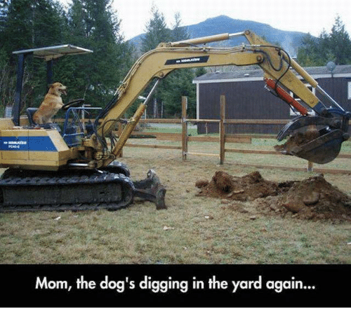 Dogs, Memes, and Mom: Mom, the dog's digging in the yard again...
