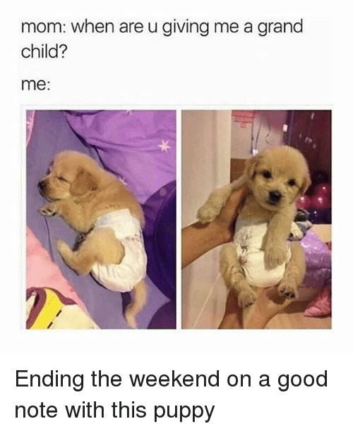 Memes, Good, and Puppy: mom: when are u giving me a grand  child?  me: Ending the weekend on a good note with this puppy