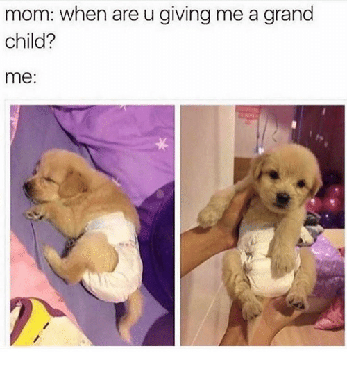 Memes, Grand, and Mom: mom: when are u giving me a grand  child?  me