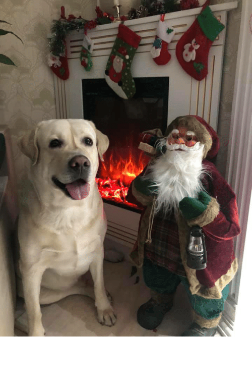 Santa Claus: mommy, take a picture of me near santa claus