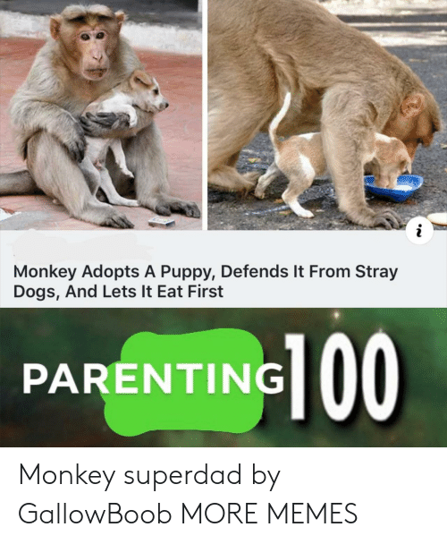 stray dogs: Monkey Adopts A Puppy, Defends It From Stray  Dogs, And Lets It Eat First  PARENTING 00 Monkey superdad by GallowBoob MORE MEMES