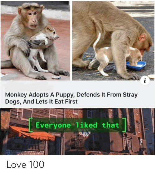 stray dogs: Monkey Adopts A Puppy, Defends It From Stray  Dogs, And Lets It Eat First  Everyone liked that Love 100