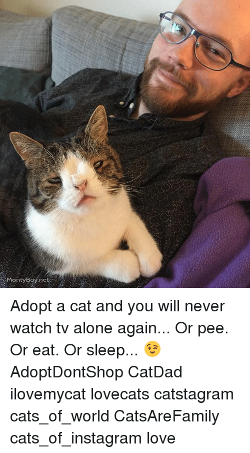 monty boy net adopt a cat and you will never watch tv