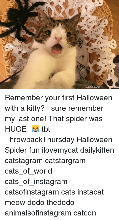 Meowe: MontyBoy.net Remember your first Halloween with a kitty? I sure remember my last one! That spider was HUGE! 😹 tbt ThrowbackThursday Halloween Spider fun ilovemycat dailykitten catstagram catstargram cats_of_world cats_of_instagram catsofinstagram cats instacat meow dodo thedodo animalsofinstagram catcon
