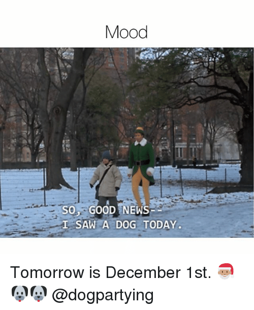 Memes, Mood, and News: Mood  SO GOOD NEWS  SAW A DOG TODAY Tomorrow is December 1st. 🎅🏽🐶🐶 @dogpartying