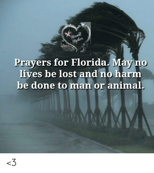 prayers: Moonlit  lysties  Prayers for Florida. May no  lives be lost and no harm  be done to man or animal. <3