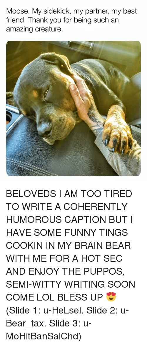 humorous: Moose. My sidekick, my partner, my best  friend. Thank you for being such an  amazing creature BELOVEDS I AM TOO TIRED TO WRITE A COHERENTLY HUMOROUS CAPTION BUT I HAVE SOME FUNNY TINGS COOKIN IN MY BRAIN BEAR WITH ME FOR A HOT SEC AND ENJOY THE PUPPOS, SEMI-WITTY WRITING SOON COME LOL BLESS UP 😍 (Slide 1: u-HeLsel. Slide 2: u-Bear_tax. Slide 3: u-MoHitBanSalChd)