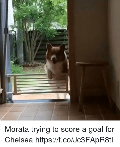 Chelsea, Soccer, and Goal: Morata trying to score a goal for Chelsea https://t.co/Jc3FApR8ti