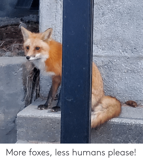 foxes: More foxes, less humans please!