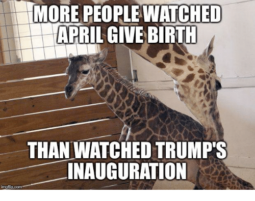 April, Com, and Birth: MORE PEOPLE WATCHED  APRIL GIVE BIRTH  THAN WATCHED TRUMP'S  INAUGURATION  inngfip.com