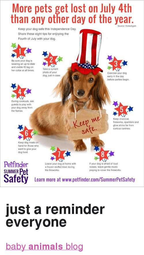 "glow sticks: More pets get lost on July 4th  than any other day of the year  Source: HomeAgain  Keep your dog safe this Independence Day  Share these eight tips for enjoying the  Fourth of July with your dog.  Be sure your dog is  wearing an up-to-date  and visible ID tag on  her collar at all times.  Take a current  photo of your  dog, just in case.  Exercise your dog  early in the day  before parties begin  4  During cookouts, ask  guests to play with  your dog away from  the flames  ep  Keep charcoal,  fireworks, sparklers and  glow sticks far from  curious canines.  2  Keep dog treats on  hand for those who  want to give your  dog food.  Leave your dog at home with  a frozen stuffed treat during  the fireworks.  If your dog is afraid of loud  noises, leave gentle music  playing to cover the fireworks.  SUMMER Pet  Safety  Leam more at www.pettinder.com/SummerPetsSafoty <h2><b>just a reminder everyone</b></h2><p><a href=""http://babyanimalgifs.tumblr.com/"" target=""_blank"">baby <b>animals</b> blog</a></p>"
