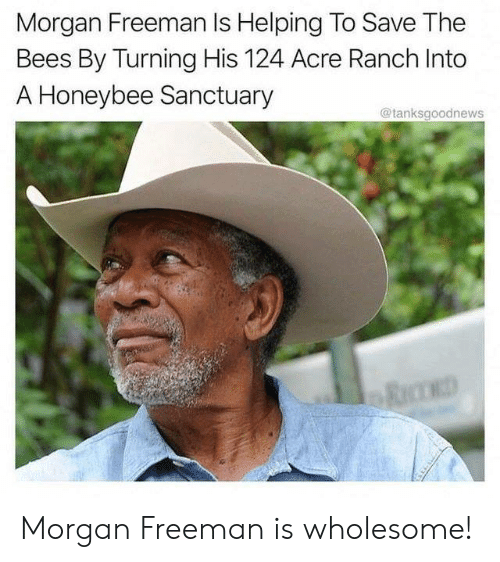Morgan Freeman: Morgan Freeman Is Helping To Save The  Bees By Turning His 124 Acre Ranch Into  A Honeybee Sanctuary  @tanksgoodnews Morgan Freeman is wholesome!