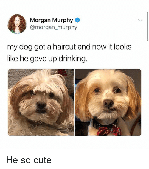 Cute, Drinking, and Haircut: Morgan Murphy  @morgan murphy  my dog got a haircut and now it looks  like he gave up drinking. He so cute