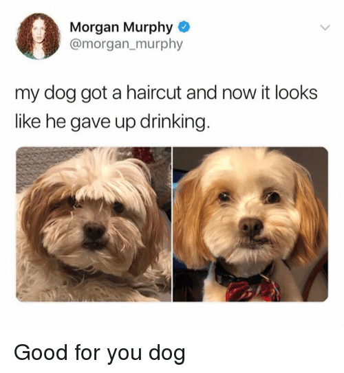 Drinking, Good for You, and Haircut: Morgan Murphy  @morgan_murphy  my dog got a haircut and now it looks  like he gave up drinking Good for you dog