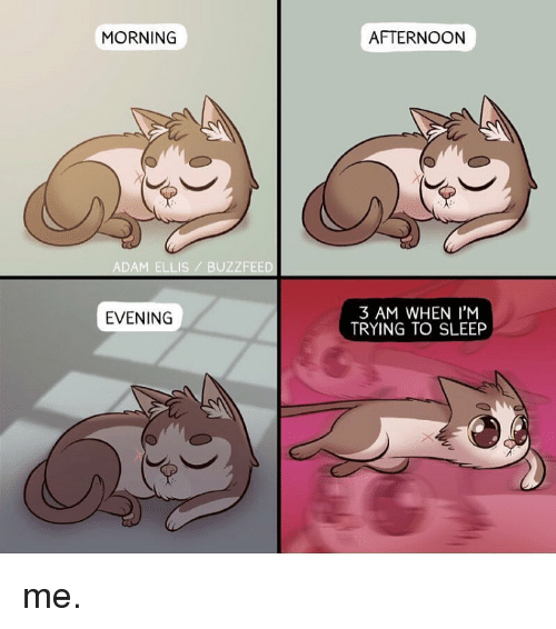Memes, Buzzfeed, and 🤖: MORNING  ADAM ELLIS BUZZFEED  EVENING  AFTERNOON  3 AM WHEN I'M  TRYING TO SLEEP me.