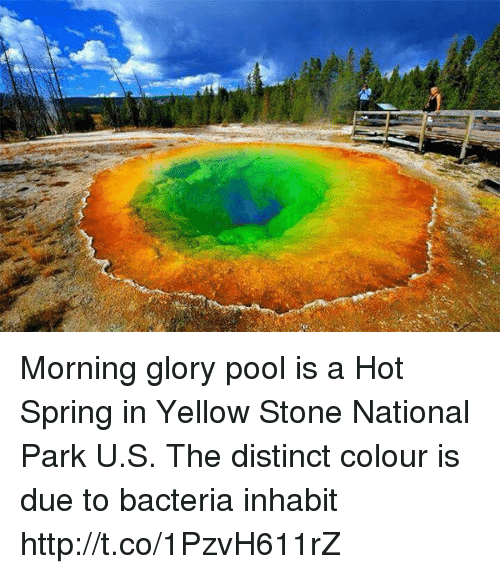 morning glory: Morning glory pool is a Hot Spring in Yellow Stone National Park U.S. The distinct colour is due to bacteria inhabit http://t.co/1PzvH611rZ