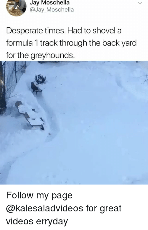 Desperate, Jay, and Memes: Moschella  Jay  @Jay_Moschella  Desperate times. Had to shovela  formula 1 track through the back yard  for the greyhounds. Follow my page @kalesaladvideos for great videos erryday