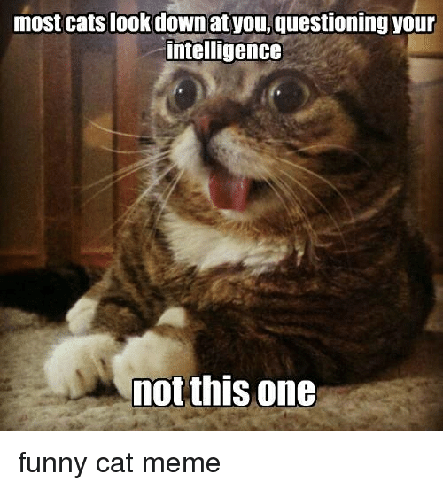 Not Funny Cat Meme : Most cats look down at you questioning your intelligence