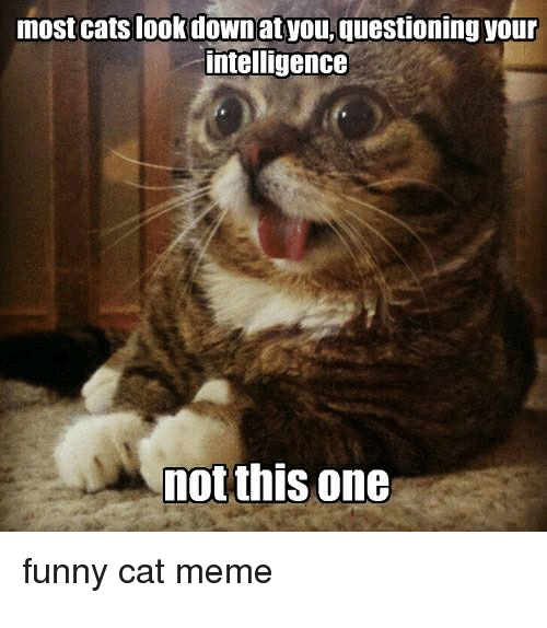 Funny Not Meme : Most cats look downat youquestioning your intelligence not