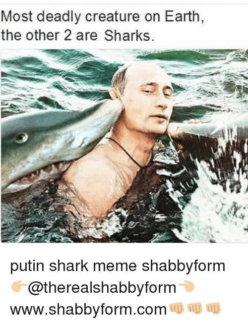 shark meme: Most deadly creature on Earth,  the other 2 are Sharks. putin shark meme shabbyform 👉🏼@therealshabbyform👈🏼 www.shabbyform.com👊🏼👊🏼👊🏼