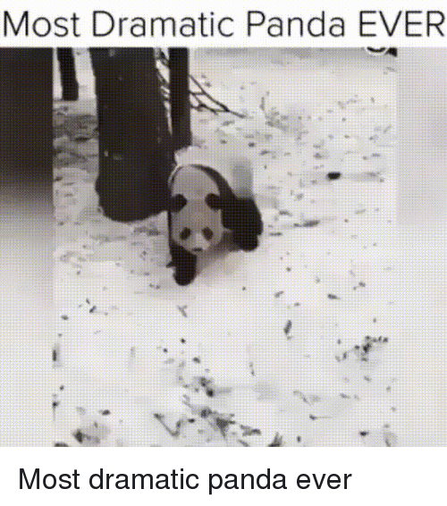 Funny, Panda, and Snow: Most Dramatic Panda EVER Most dramatic panda ever