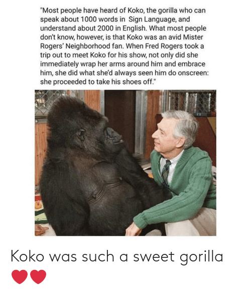 "koko: ""Most people have heard of Koko, the gorilla who can  speak about 1000 words in Sign Language, and  understand about 2000 in English. What most people  don't know, however, is that Koko was an avid Mister  Rogers' Neighborhood fan. When Fred Rogers took a  trip out to meet Koko for his show, not only did she  immediately wrap her arms around him and embrace  him, she did what she'd always seen him do onscreen:  she proceeded to take his shoes off."" Koko was such a sweet gorilla ❤️❤️"