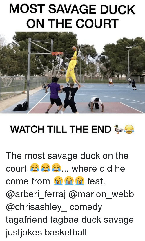 Basketball, Memes, and Savage: MOST SAVAGE DUCK  ON THE COURT  WATCH TILL THE END The most savage duck on the court 😂😂😂... where did he come from 😭😭😭 feat. @arberi_ferraj @marlon_webb @chrisashley_ comedy tagafriend tagbae duck savage justjokes basketball