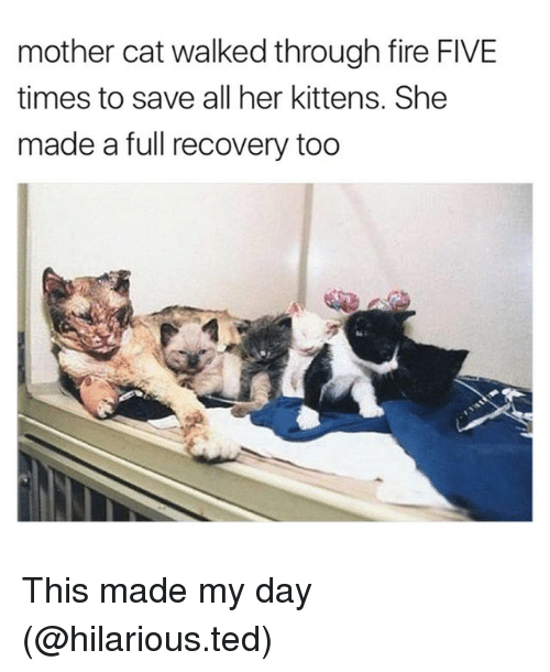 Cats, Fire, and Funny: mother cat walked through fire FIVE  times to save all her kittens. She  made a full recovery too This made my day (@hilarious.ted)