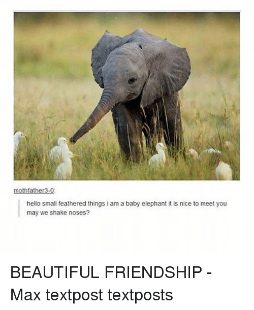 Baby Elephant: mothfather3-0  hello small feathered things iam a baby elephant itis nice to meet you  may we shake noses? BEAUTIFUL FRIENDSHIP - Max textpost textposts