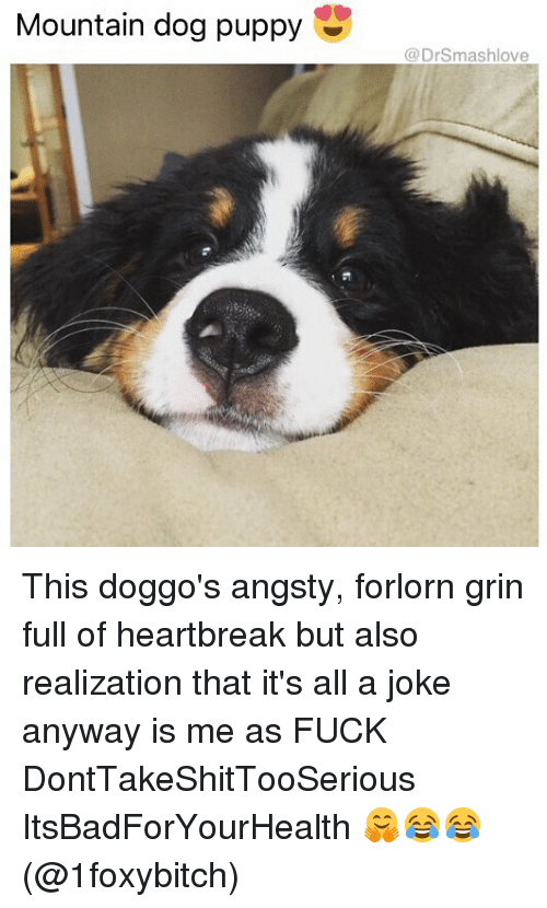Grinning: Mountain dog puppy  @DrSmashlove This doggo's angsty, forlorn grin full of heartbreak but also realization that it's all a joke anyway is me as FUCK DontTakeShitTooSerious ItsBadForYourHealth 🤗😂😂 (@1foxybitch)