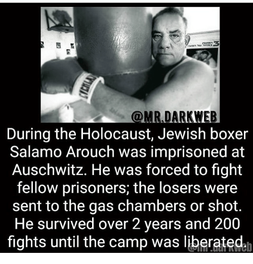 Bailey Jay, Memes, and Auschwitz: @MR DARKWEB  During the Holocaust, Jewish boxer  Salamo Arouch was imprisoned at  Auschwitz. He was forced to fight  fellow prisoners; the losers were  sent to the gas chambers or shot.  He survived over 2 years and 200  fights until the camp was liberated