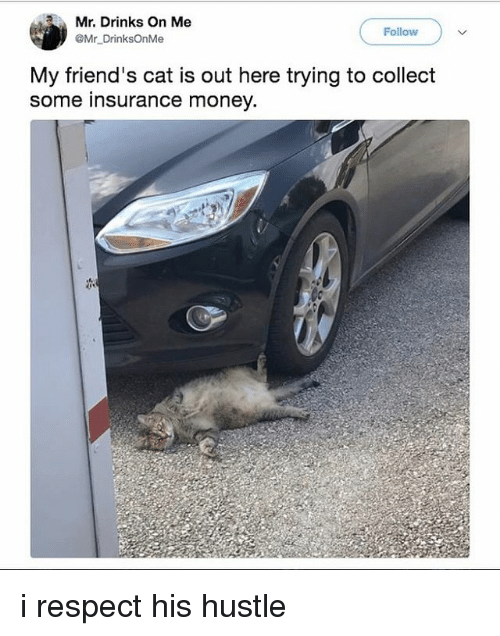 Friends, Money, and Respect: Mr. Drinks On Me  @Mr DrinksOnMe  Follow  My friend's cat is out here trying to colledt  some insurance money. i respect his hustle