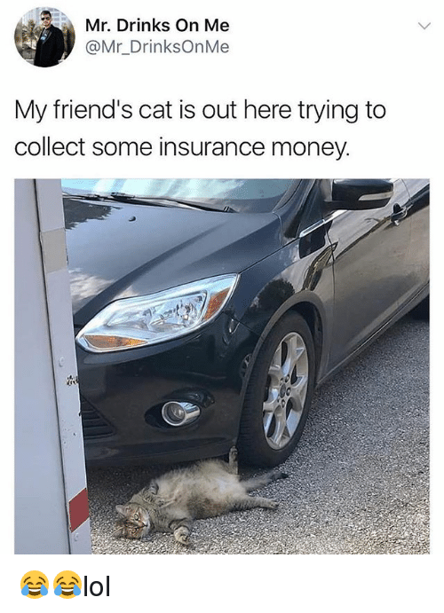 Friends, Memes, and Money: Mr. Drinks On Me  @Mr_DrinksOnMe  My friend's cat is out here trying to  collect some insurance money 😂😂lol