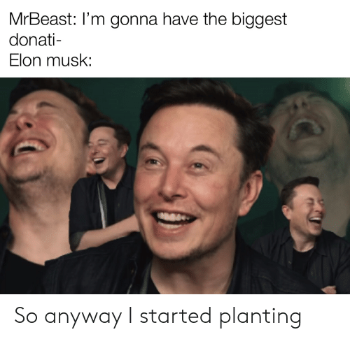 elon musk: MrBeast: I'm gonna have the biggest  donati-  Elon musk: So anyway I started planting