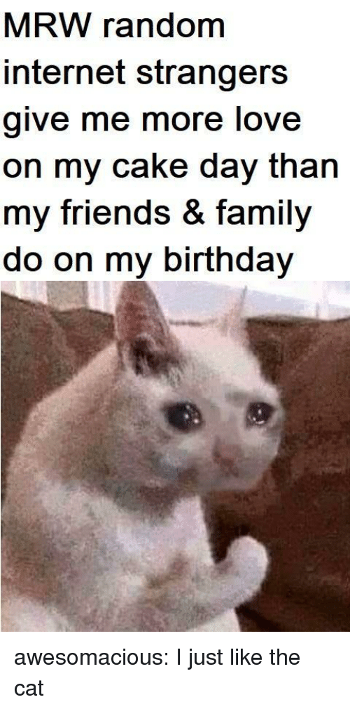 MRW: MRW random  internet strangers  give me more love  on my cake day than  my friends & family  do on my birthday awesomacious:  I just like the cat