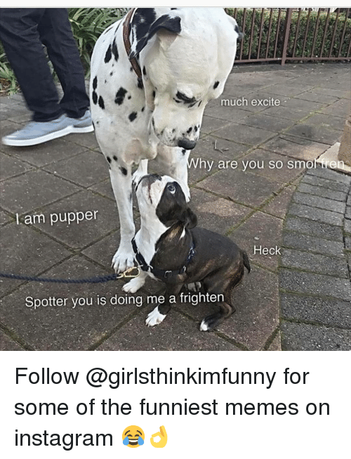 Excite: much excite  hy are you so smonre  Lam puppen  Heck  Spotter you is doing me a frighten Follow @girlsthinkimfunny for some of the funniest memes on instagram 😂👌
