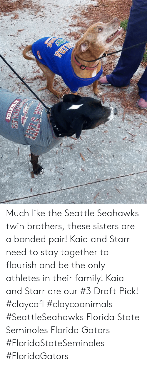 Seattle Seahawks: Much like the Seattle Seahawks' twin brothers, these sisters are a bonded pair! Kaia and Starr need to stay together to flourish and be the only athletes in their family! Kaia and Starr are our #3 Draft Pick! #claycofl #claycoanimals #SeattleSeahawks Florida State Seminoles Florida Gators #FloridaStateSeminoles #FloridaGators