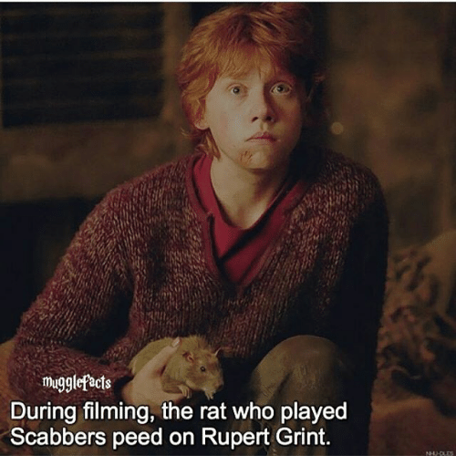 Mugglefacts During Filming the Rat Who Played Scabbers ... Rupert Grint 2017