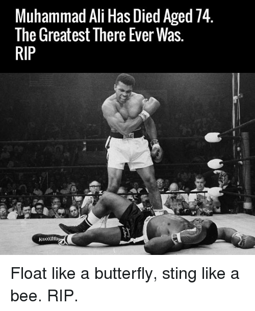sting like a bee: Muhammad Ali Has Died Aged 74  The Greatest There Ever Was.  RIP Float like a butterfly, sting like a bee. RIP.