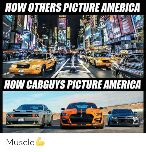 muscle: Muscle💪