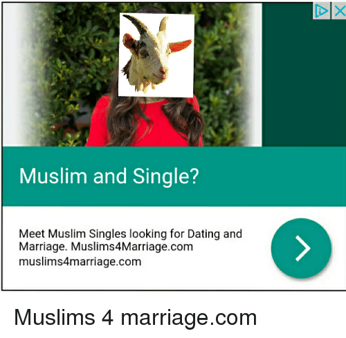 muslim singles in driver 29032014  yahoo search search skip to navigation skip to  doctors will be urged to dob in their drug-using patients who continue to drive in a bid to get them.