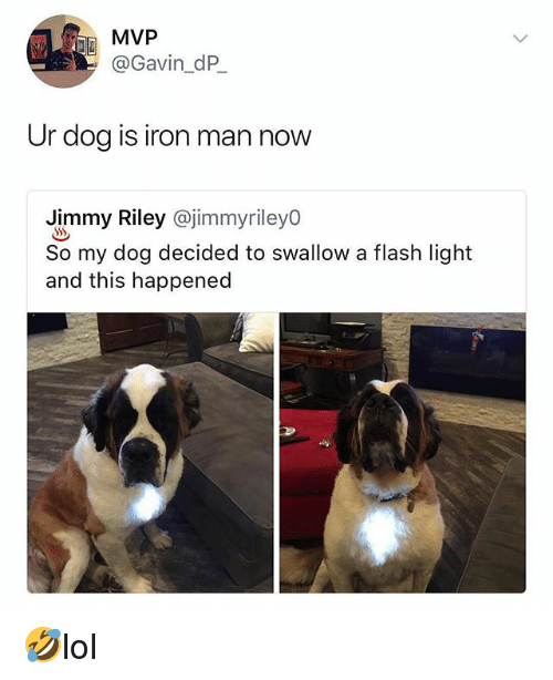 Iron Man, Memes, and 🤖: MVP  @Gavin_dP  Ur dog is iron man now  Jimmy Riley @jimmyrileyo  So my dog decided to swallow a flash light  and this happened 🤣lol